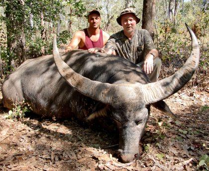 Australia Water Buffalo
