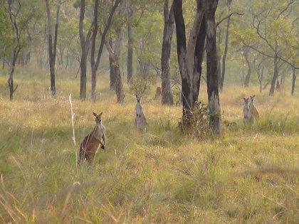 Hunt Australia