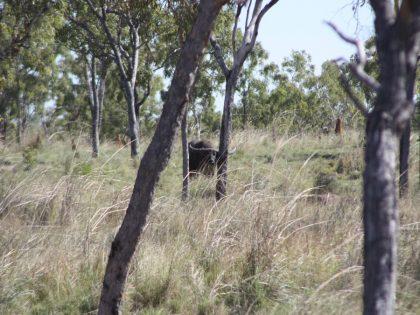 Australia Big Game Hunting