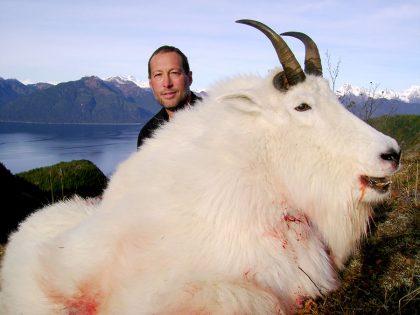 Mountain Goat Alaska