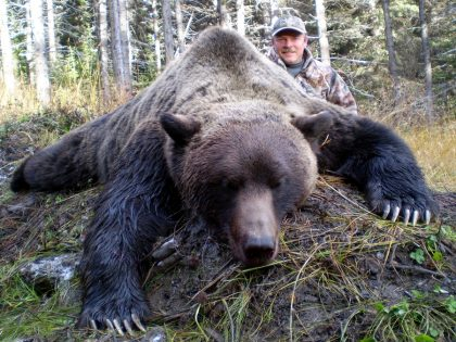 Grizzly BC Canada
