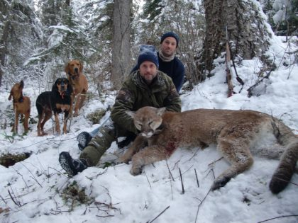 British Columbia Mountain Lion