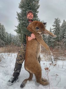 BC Mountain Lion Hunt