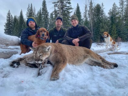 British Columbia Mountain Lion Hunt