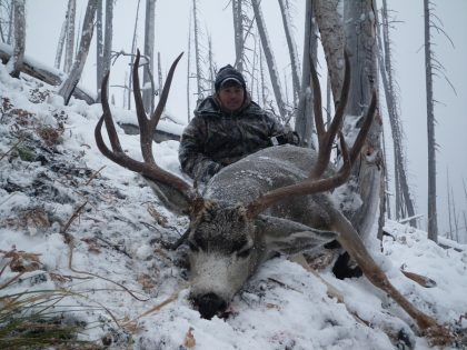 British Columbia Mule Deer
