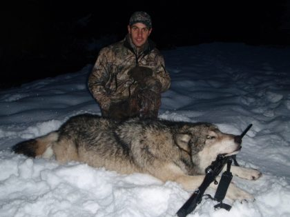 Wolf BC Canada