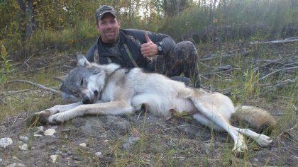 British Columbia Wolf