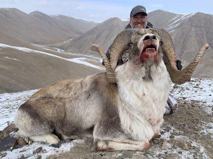 Kyrgyzstan Hume Argali