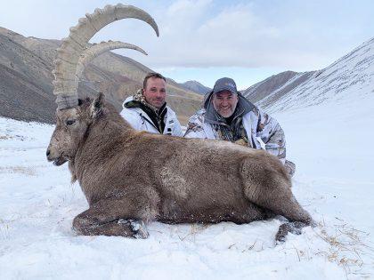 Kyrgyzstan Ibex