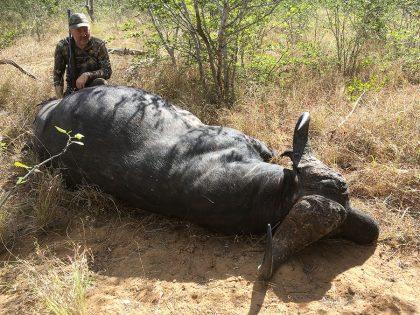 Cape Buffalo hunt in Mozambique