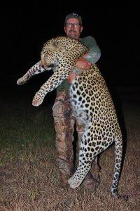 Mozambique Leopard