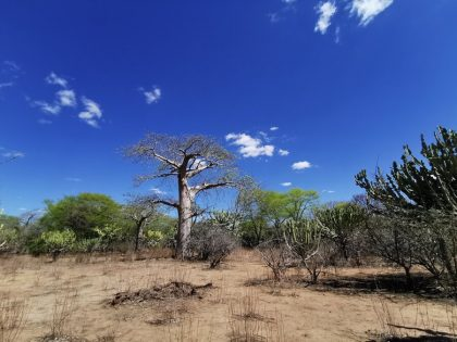 Mozambique Scenery