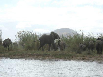 Mozambique Elephant Hunting