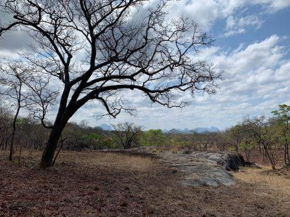 Hunt Mozambique
