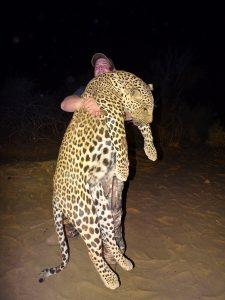 Namibia Leopard