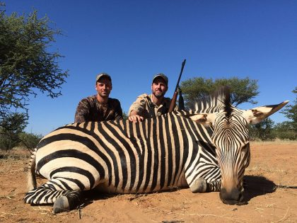 Zebra Hunting in Namibia