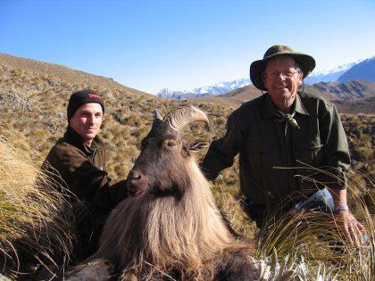 New Zealand Tahr