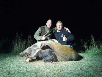 South Africa Bushpig Hunting