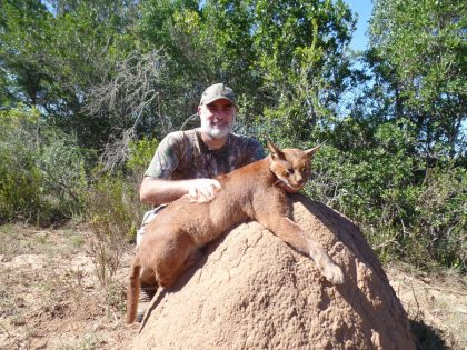 South Africa Caracal Hunting