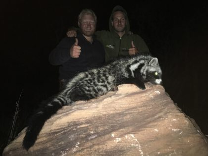 South Africa Civet Hunting