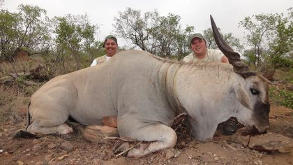 Eland Hunt in South Africa