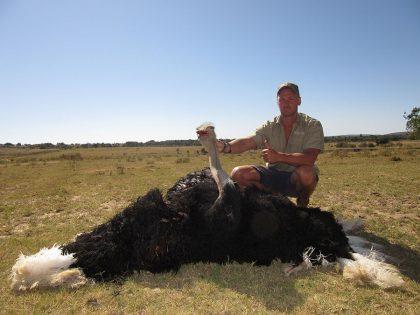 Ostrich Hunt in South Africa