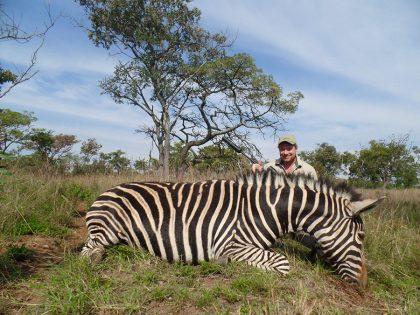 Hunt Zebra in South Africa