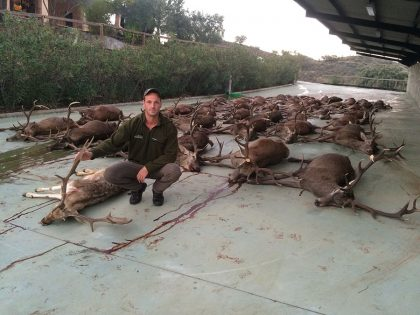 Monteria Hunting in Spain