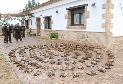 Hunting Partridge in Spain