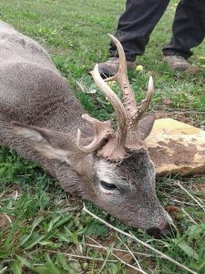 Spain Roebuck Hunting