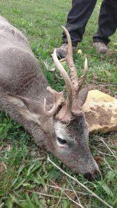 Spain Roebuck Hunting