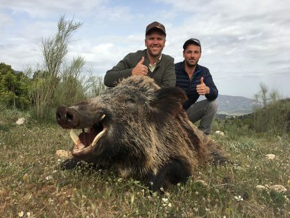 Hunting Boar in Spain