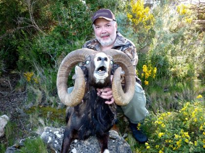 SpainMuflon