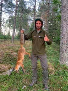 Sweden Fox Hunting
