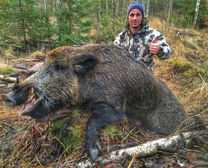 Hunting Wild Boar in Sweden