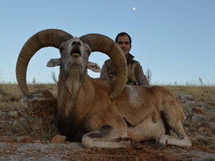Turkey Sheep Hunting