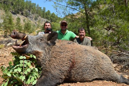Wild Boar Hunting in Turkey
