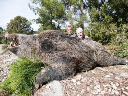 Turkey Wild Boar Hunting