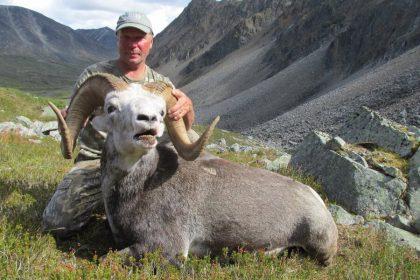 Yukon Stone Sheep