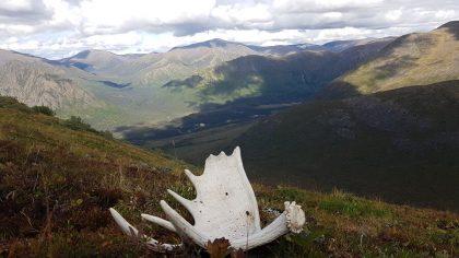 Yukon Hunting