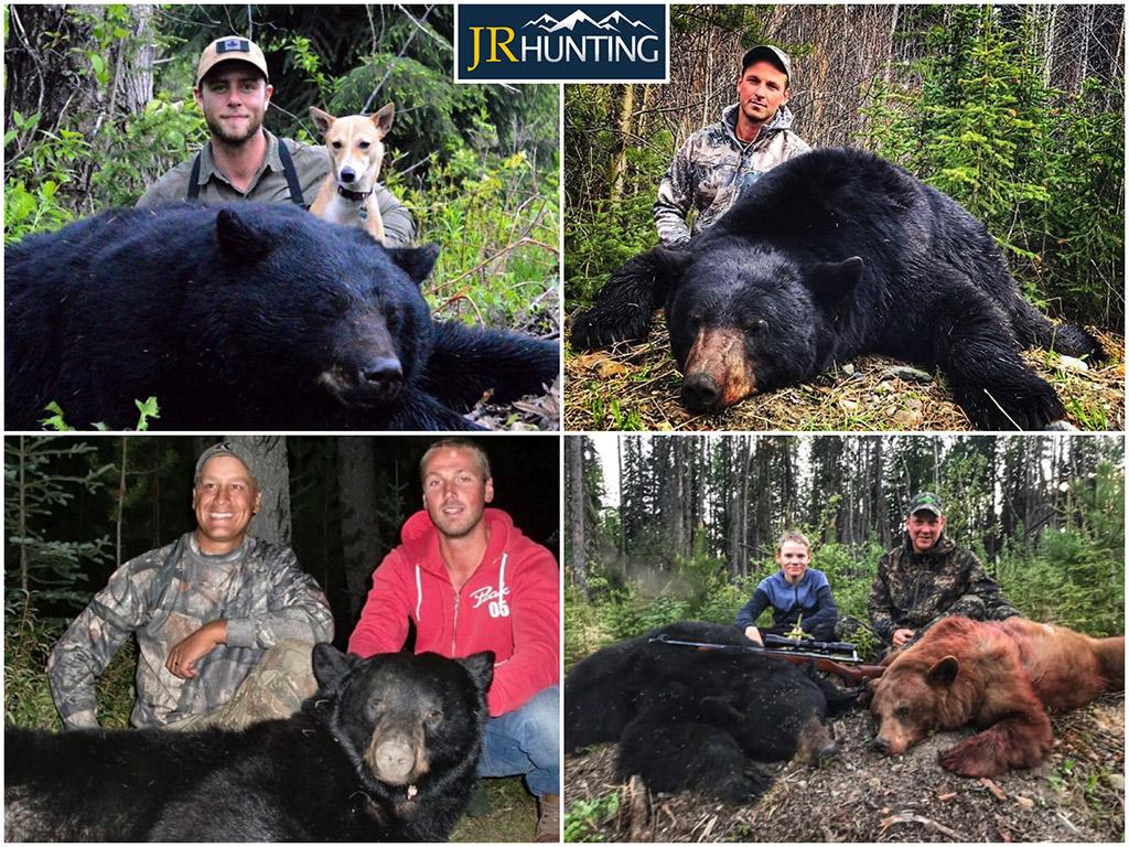 Hound Hunts for Black Bear