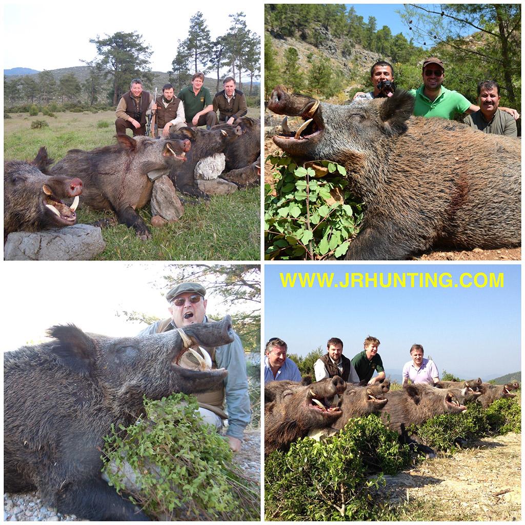 Wild Boar Hutnts in Turkey
