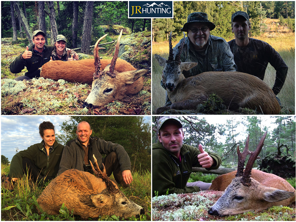Roebuck Hunt Sweden