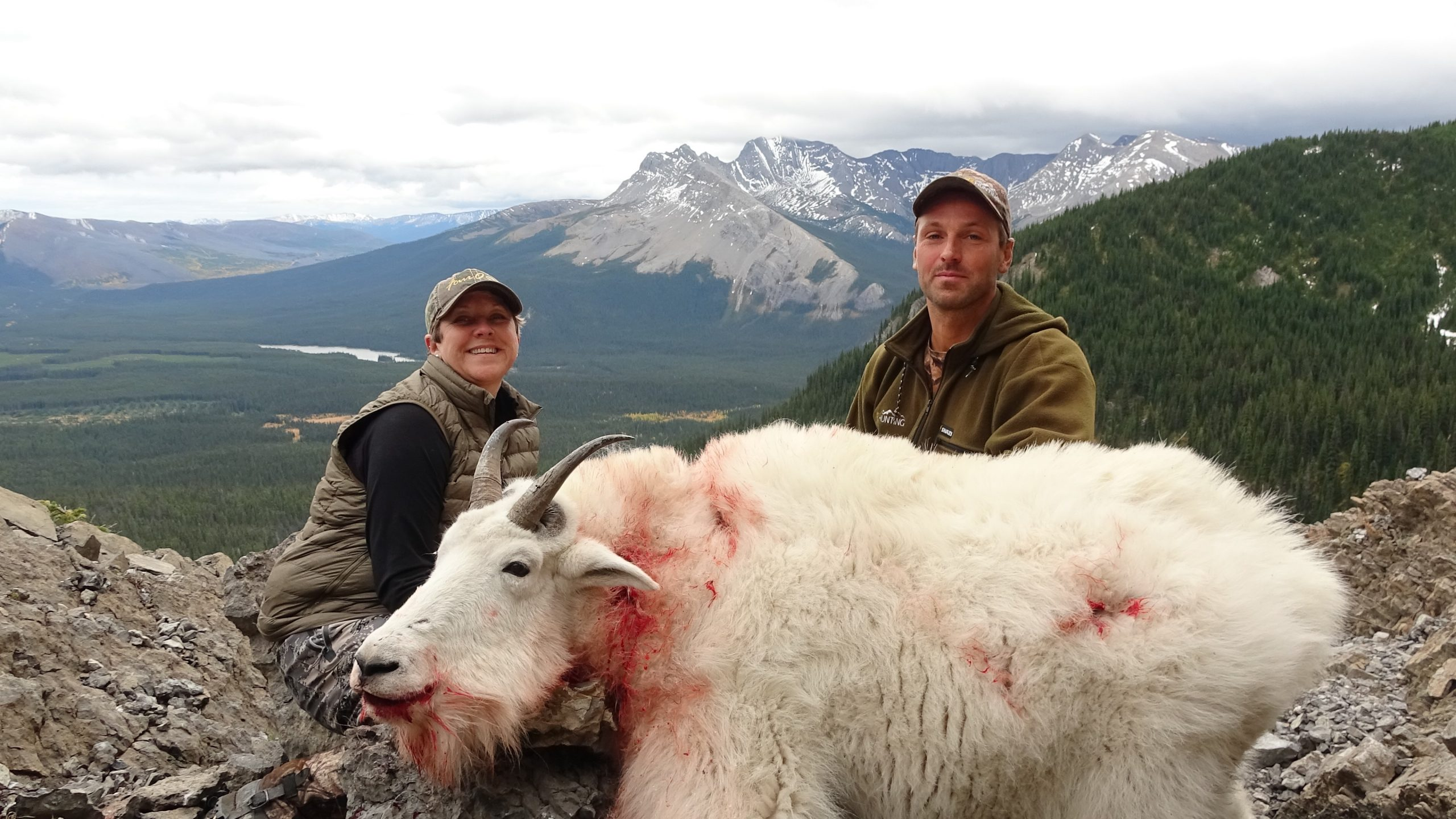 British Columbia Mountain Goat