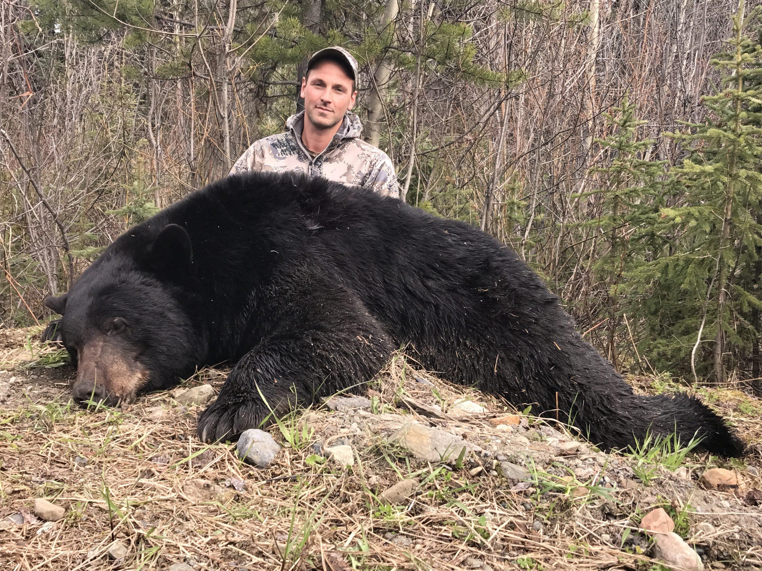 BC Black Bear