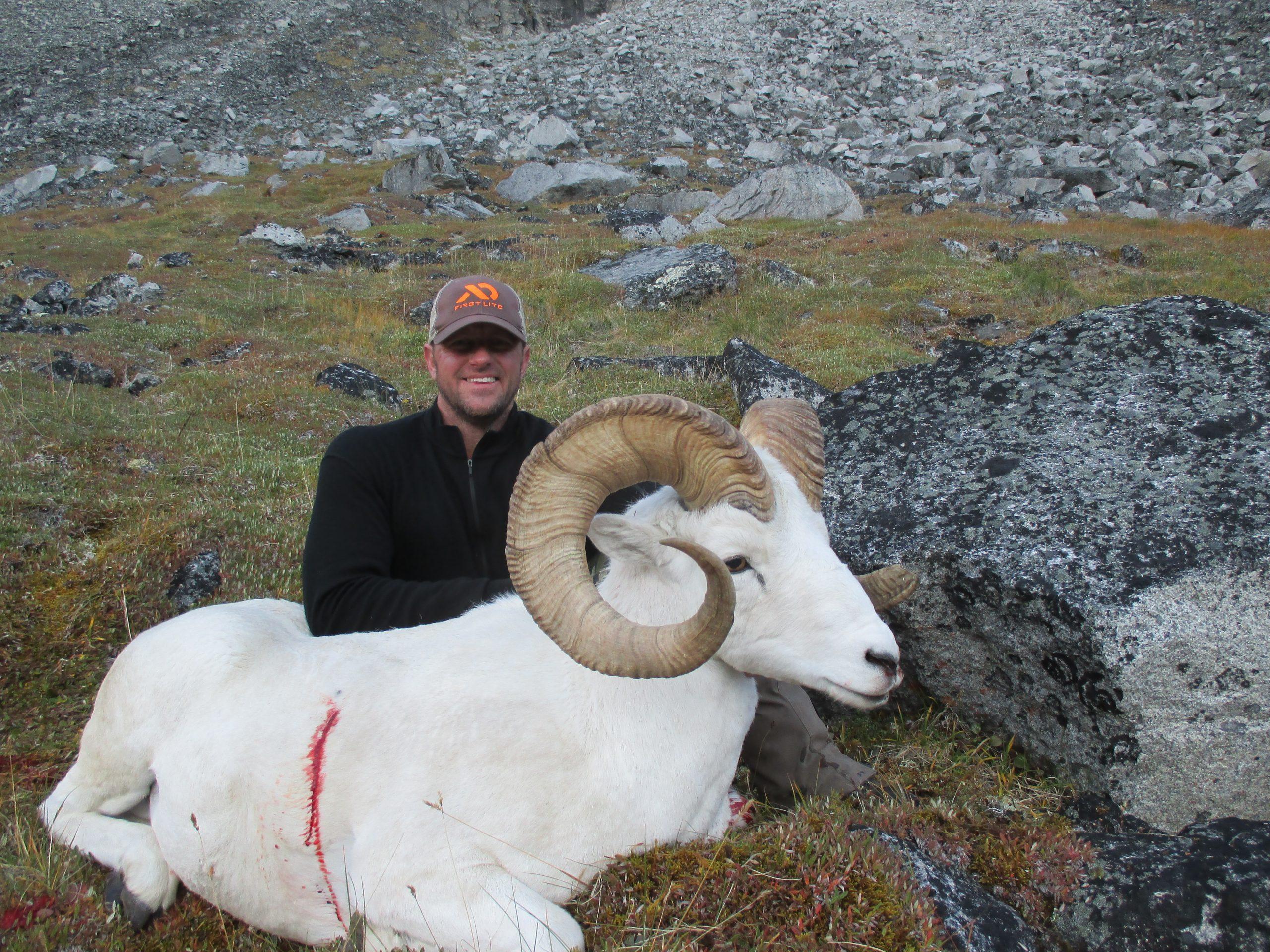 Yukon Dall Sheep