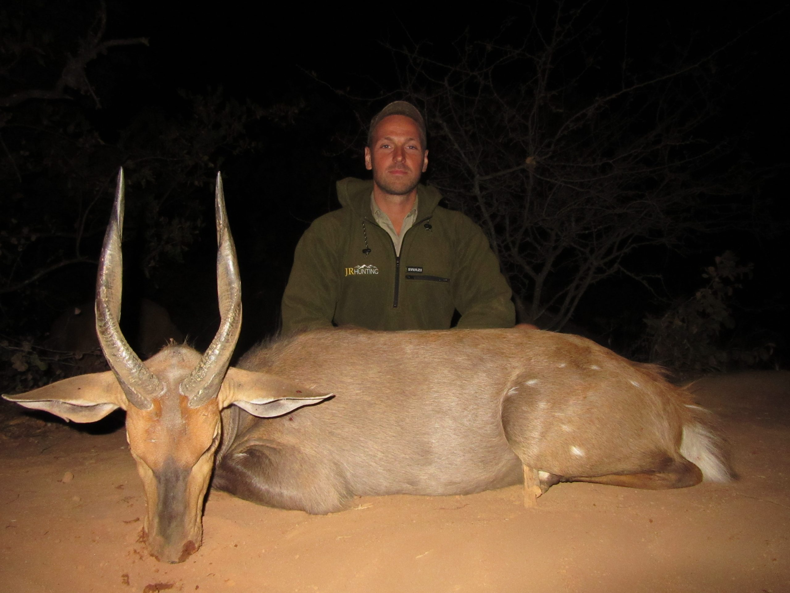 South Africa Bushbuck