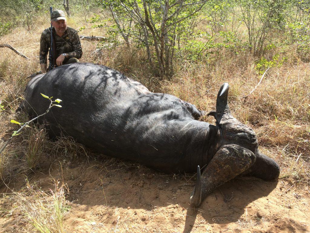 Mozambique Cape Buffalo
